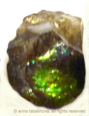 ammolite-1-anna-tabakhova-P1110603 copyrigh